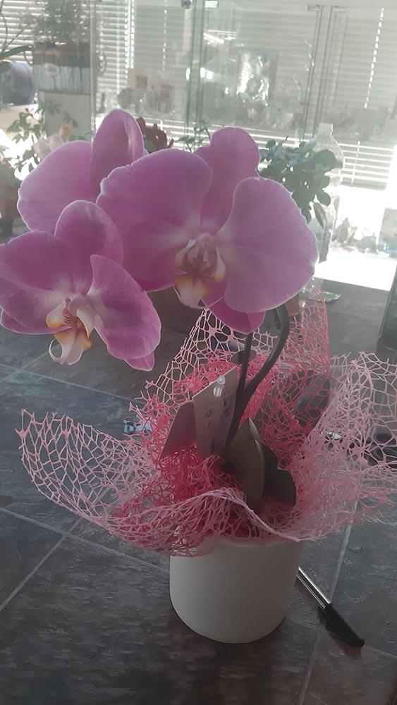 Orchidee Naturalmente Piante e Fiori